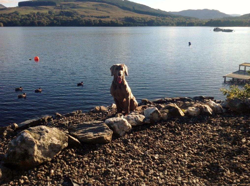 Pet enjoying Briar Cottages slipway to Loch Earn