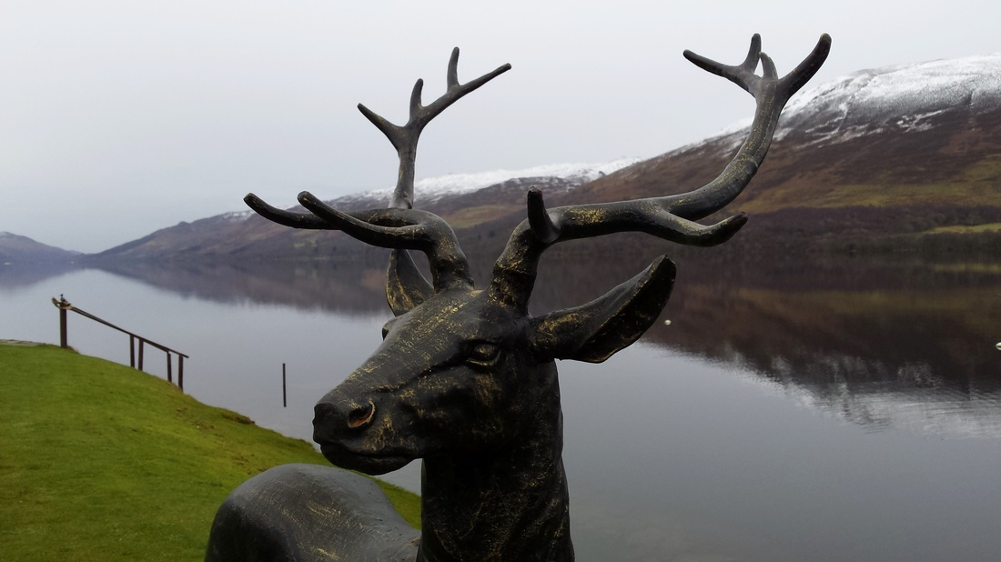 Stan the Stag Loch Earn close up