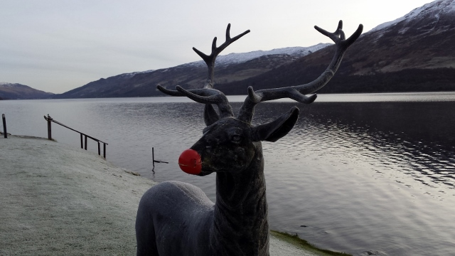 Rudolph Stag