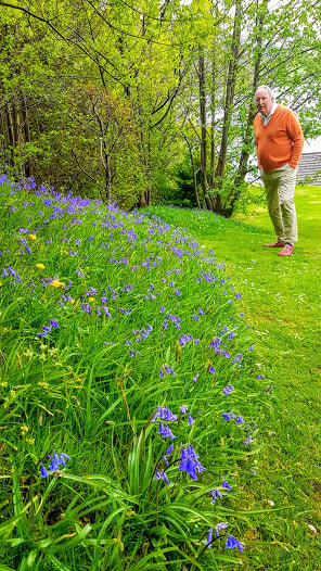 native bluebells at Briar Cottage at Loch Earn
