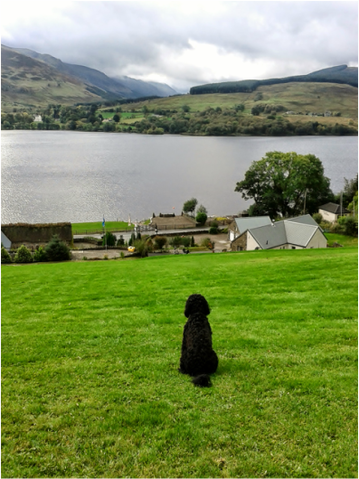 Dog admiring the view of Loch Earn