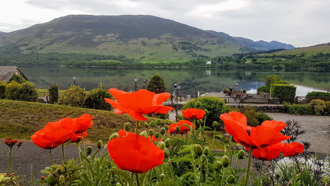 poppies in bloom at Briar Cottages