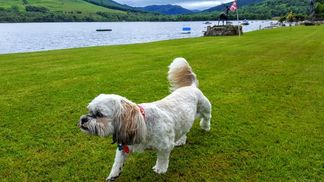 Pet sniffs out Loch Earn garden