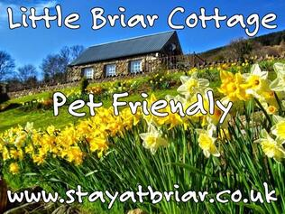 Little Briar Cottage Lochearnhead with daffodils in Spring