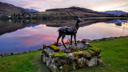Pet friendly stag Loch Earn
