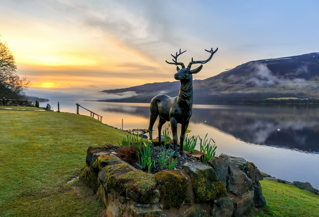 Stan The Stag at Briar Cottages Lochearnhead, photo by Dave Murray
